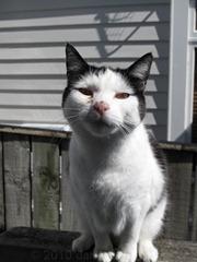 Dotty the cat